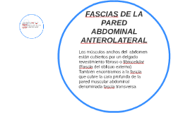 FASCIAS DE LA PARED ABDOMINAL ANTEROLATERAL