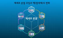17.3-4-08.체세포 분열 과정과 핵(염색체)의 변화