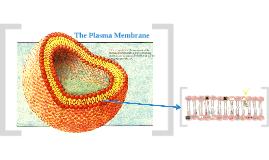 AP BIO Cell Membranes