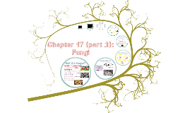 Copy of Chapter 17 (part 2): Fungi