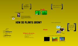 Copy of Life Cycle of Plants