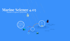 Marine Science 4.05