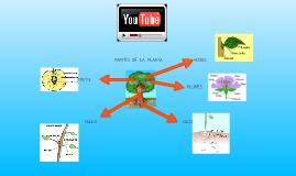 Las plantas y su complejidad.