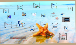 Copy of Überfischung der Meere