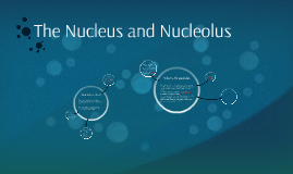 The Nucleus and Nucleolus
