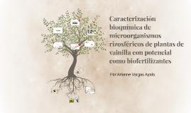 Caracterización bioquímica de microorganismos rizosféricos d