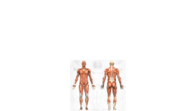 Anatomy Information - Anatomy Diagram of the Human Body
