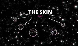 Copy of Copy of THE SKIN