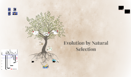 Copy of Evolution by Natural Selection