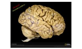 Copy of brain