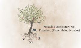 Zonación en el estero de Muisne (Esmeraldas, Ecuador)