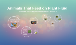 Copy of BIO1022 - Animals that feed on plant fluid