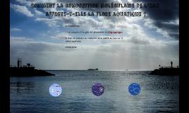 Comment la composition moléculaire de l'eau affecte-t-elle l