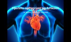 Hjertets opbygning