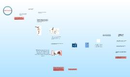 Copy of Comparative Anatomy