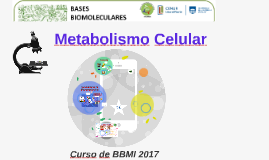 Copia de Copy of Metabolismo
