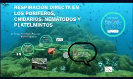 RESPIRACIÓN DIRECTA EN LOS PORIFEROS, CNIDARIOS, NEMÁTODOS Y