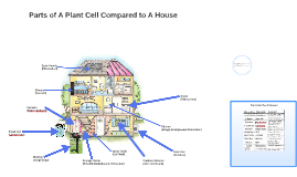 Plant Cell Comparison to House