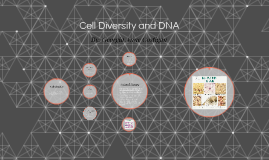 Cell Diversity and DNA