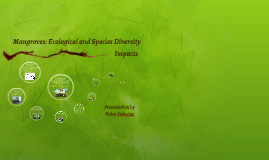 Mangroves: Ecological and Species Diversity
