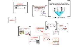 Copy of Cladrogramas