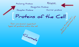 Proteins of the Cell