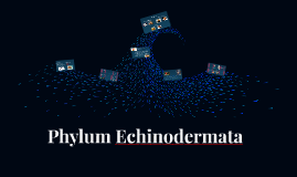 Phylum Echidnodermata