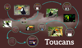 Copy of Toucans by Shay