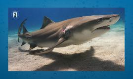 La peau de requin et les tenues de natation