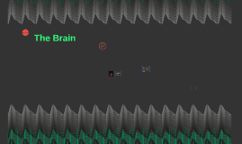 Chapter 3 The Brain