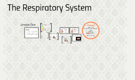 A&P Level 2 The Respiratory System