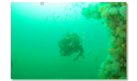 Dive Scapa