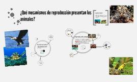 ¿Qué mecanismos de reproducción presentan los animales?