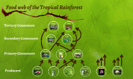 Food web of the Tropical Rainforest