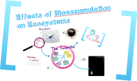 2.3 Effects of Bioaccumulation on the Ecosystem