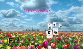 LA FLOR AMAPOLA