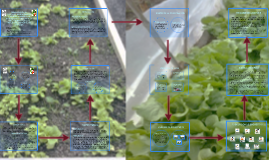 comparacion de cultivos y de suelo segun las condiciones ambientales de la vereda quigua abajo
