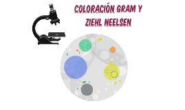 Coloración Gram y Ziehl Neelsen