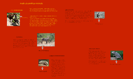 A talk about African Animals