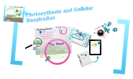 Photosynthesis and Cellular Respiration Project