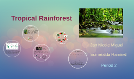 Copy of Tropical Rainforest
