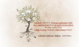 .AROEIRA-BRANCA. [Lithraea molleoides (Vell.)