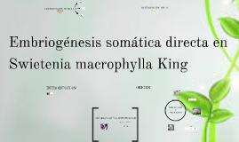 Embriogénesis somática directa en Sweietenia macrophylla Kin