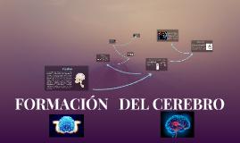 FORMACION DEL CEREBRO
