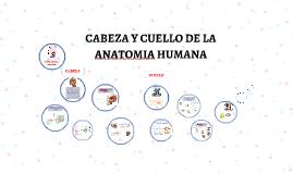 CABEZA Y CUELLO DE LA ANATOMIA HUMANA