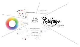 Copy of Copy of Esófago.