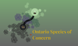 Ontario Species of Concern
