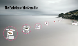 The Evolution of the Crocodile