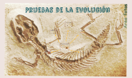 Pruebas Paleontológicas