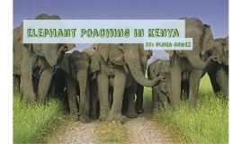 Elephant Poaching in Kenya